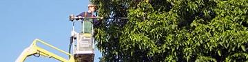 Bäume / Gehölzpflege